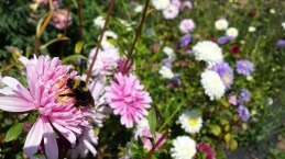 Teresa Porter 2017 (Bumblebee flowers)